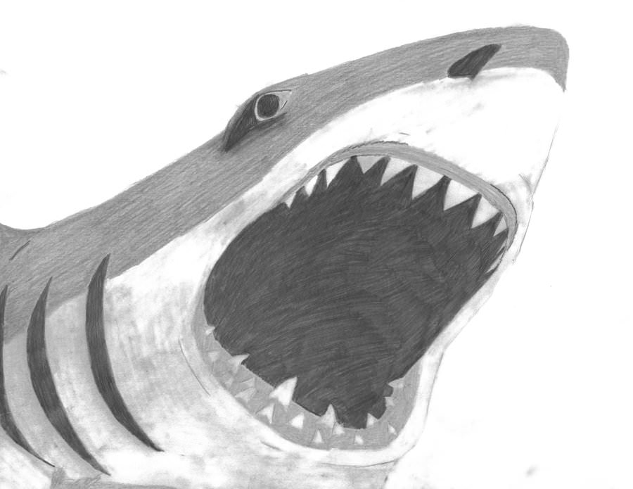 Drawn shark pencil 20+ Drawing Trends Pencil Attack