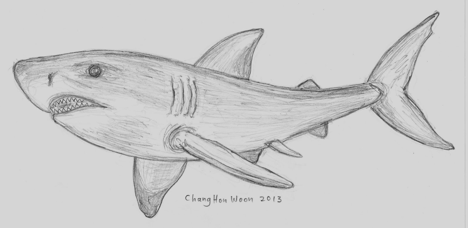 Drawn shark pencil MS PICTURES HOW WORD TO