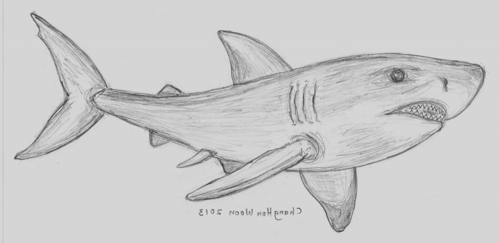 Drawn shark pencil Word In Art To November