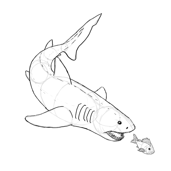 Drawn shark skull Draw How and draw shark