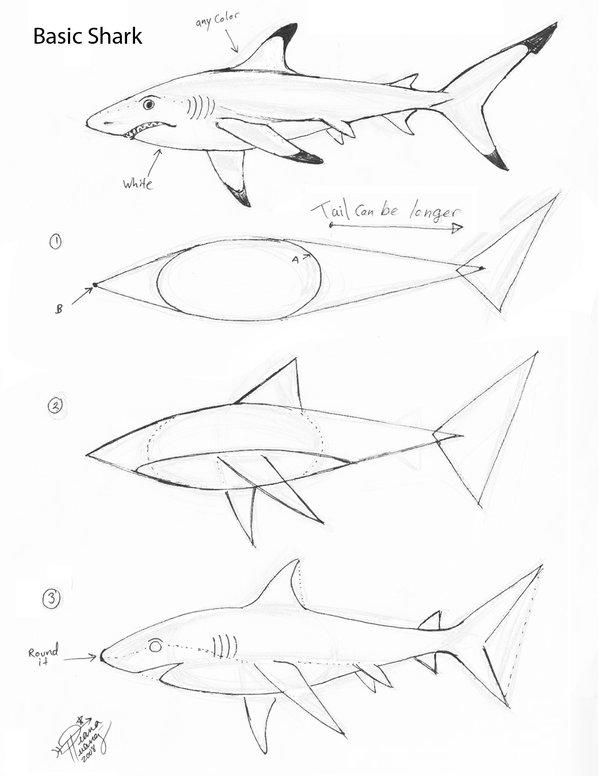 Drawn shark step by step Huang deviantart  com+on+@deviantART Huang