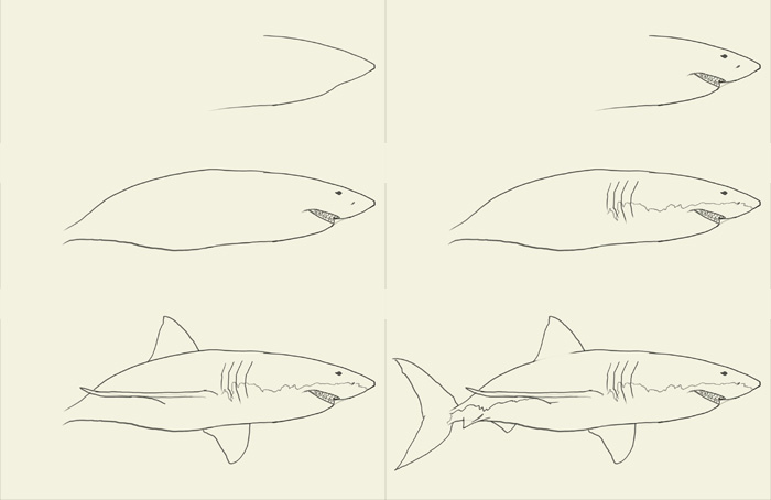 Drawn shark step by step Drawing  Free Download To