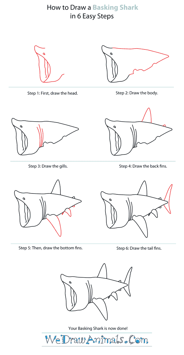 Drawn shark step by step Basking Shark to Draw By