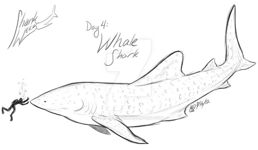 Drawn shark whale shark 4: Whale Week by Shark