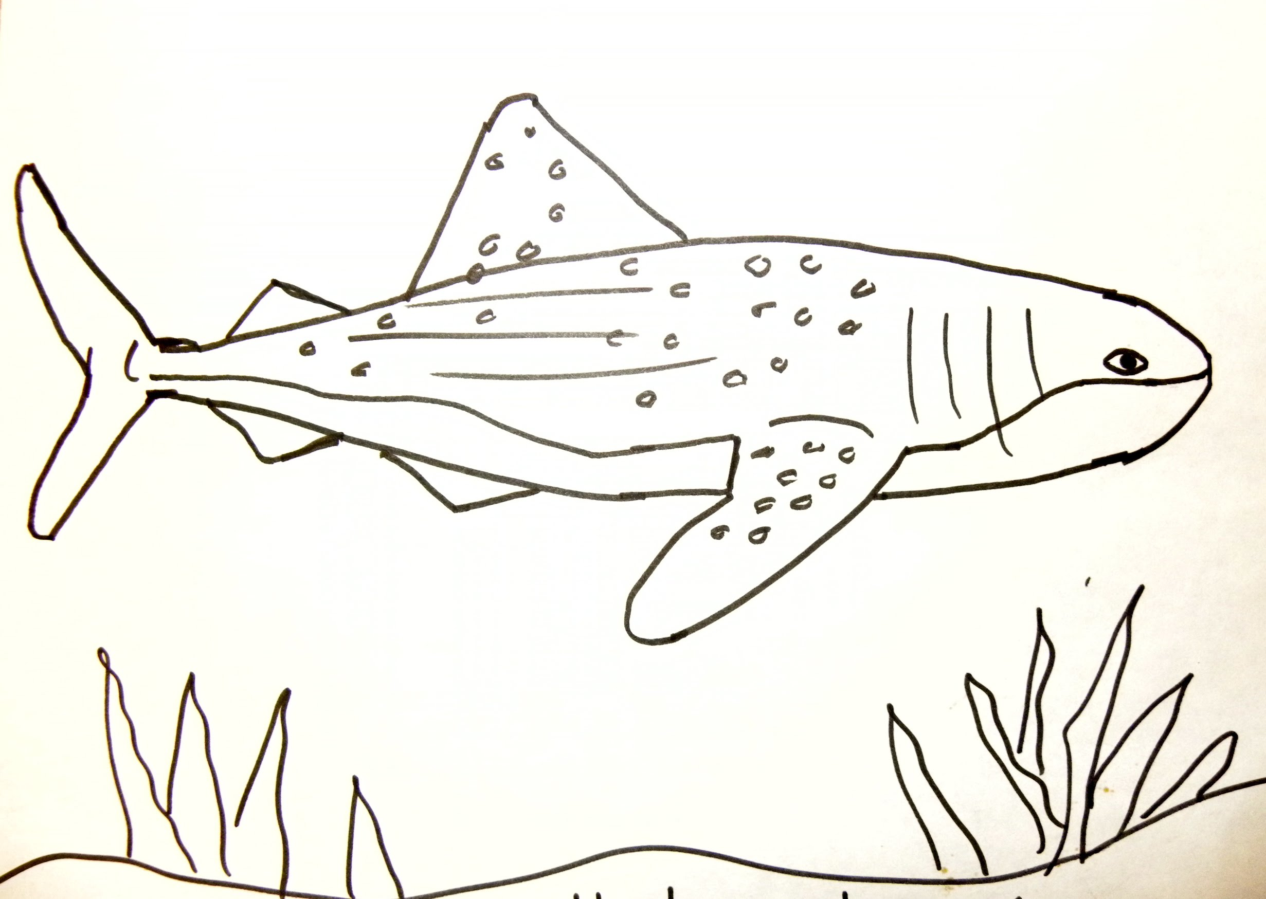 Drawn shark whale shark Draw: Can YouTube Kids Whale