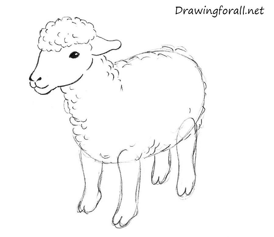 Drawn sheep Sheep net draw DrawingForAll to