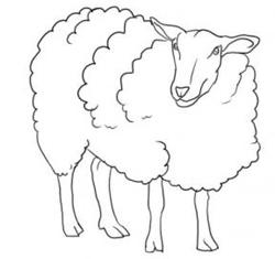 Drawn sheep Drawing & Sheep  Sheep