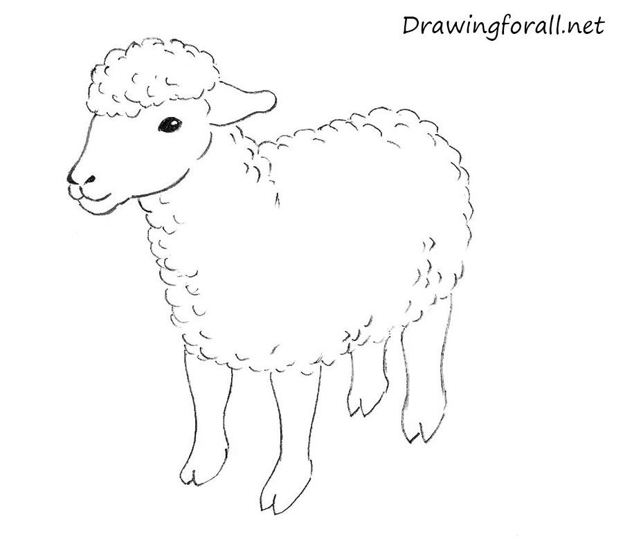Drawn sheep Net sheep DrawingForAll draw Kids