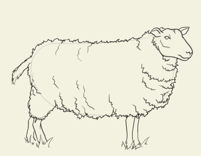 Drawn sheep Pinterest drawing on Painting ideas