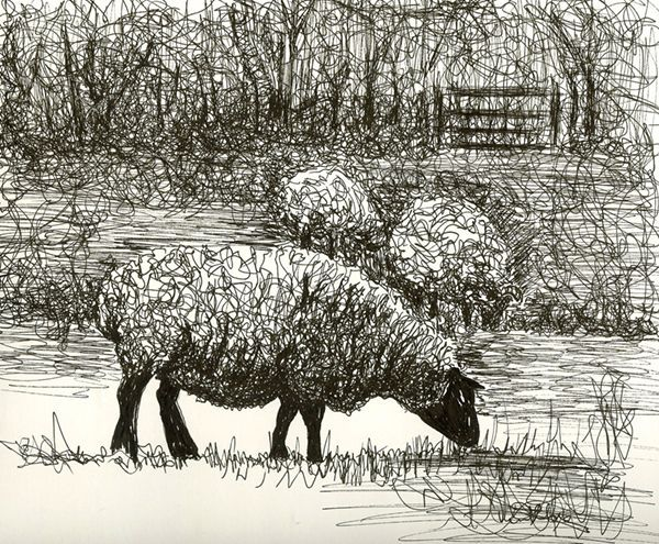 Drawn sheep abstract Pictify drawings Beautiful 2 Sheep