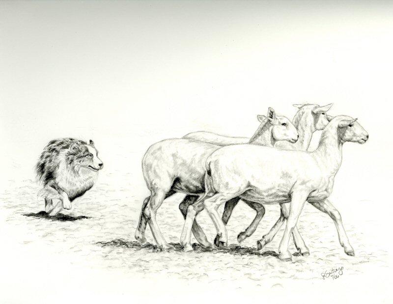 Drawn sheep herd sheep DeviantArt Sheep by Herding on