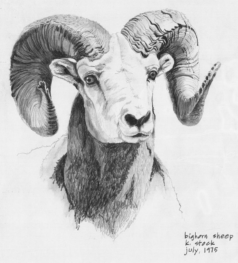 Drawn sheep pencil drawing And SheepPencilSketchesAnimals Google Sheep ram