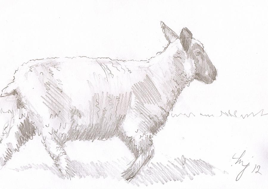 Drawn sheep pencil drawing Pencil PHotos WallpaperSafari Photos Sketch