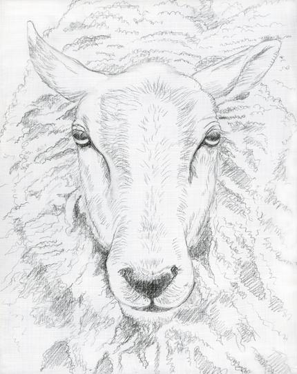 Drawn sheep pencil drawing Image Sheep Sheep face face