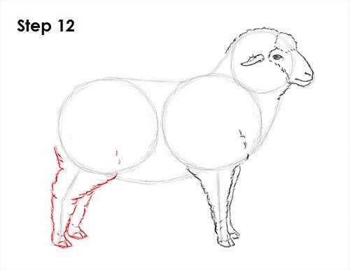 Drawn sheep pencil drawing A to Sheep Draw Draw
