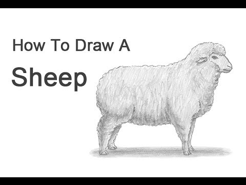 Drawn sheep pencil drawing A to YouTube from Draw