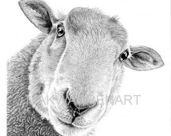 Drawn sheep pencil drawing Drawing Print Print Pencil A4