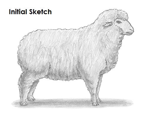 Drawn sheep pencil drawing Sheep Draw Sheep a Draw