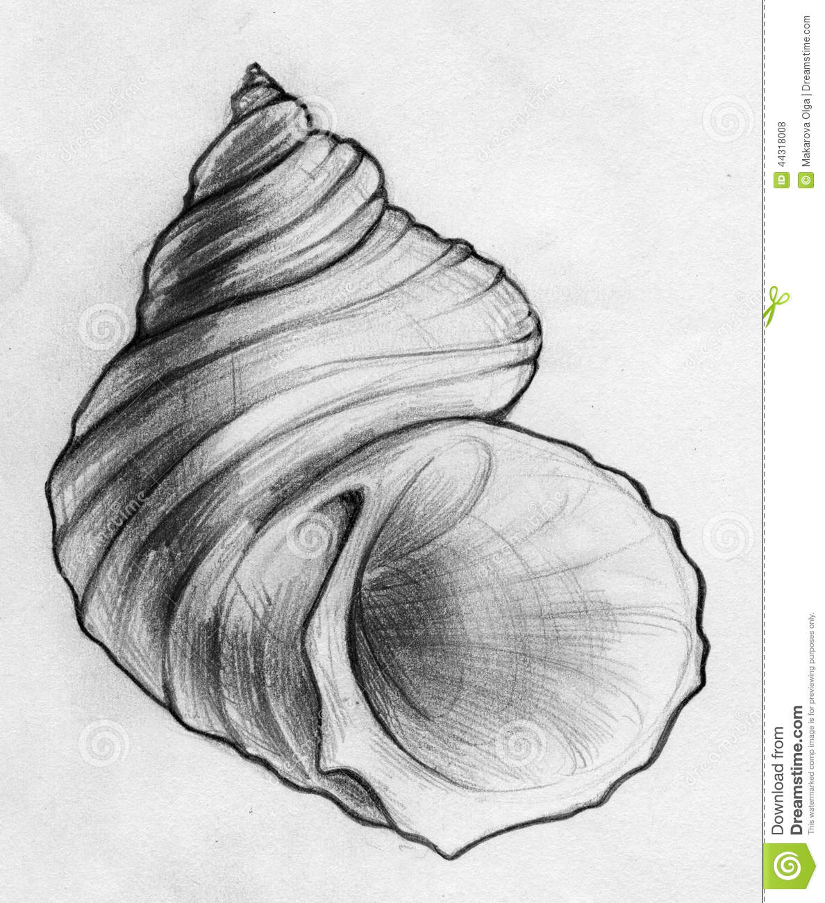 Drawn shell Study drawings Done 44318008 Shell