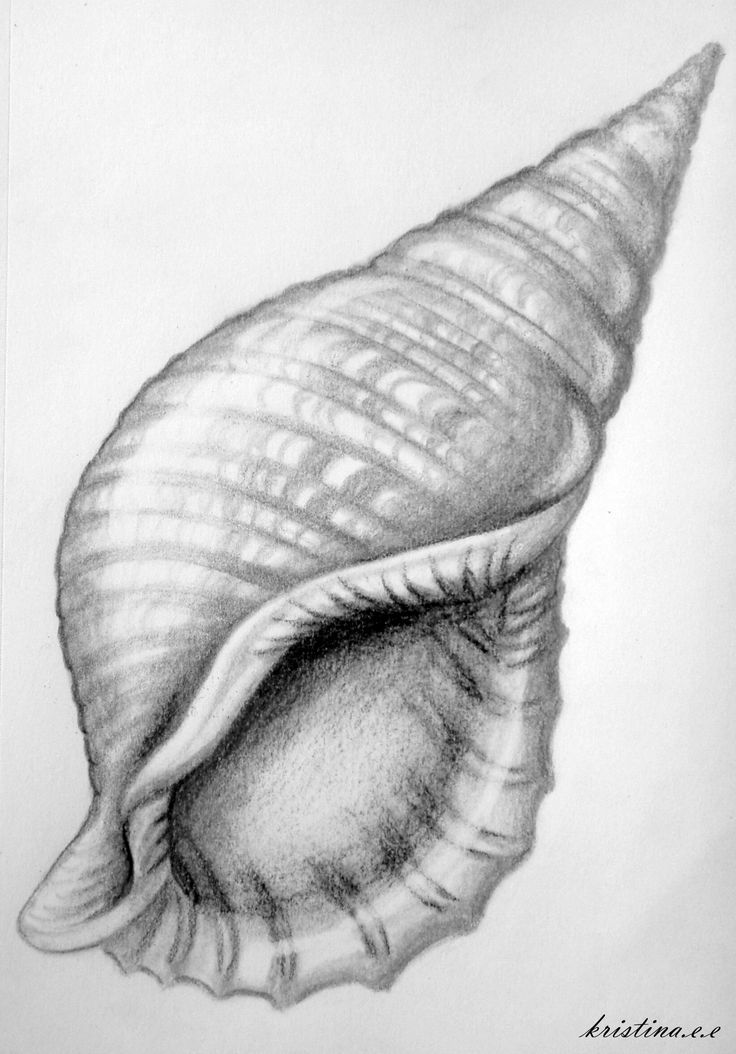 Drawn shell Shell that the feel shading