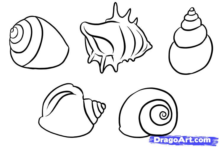 Drawn shell Shells Pop How Stuff Draw