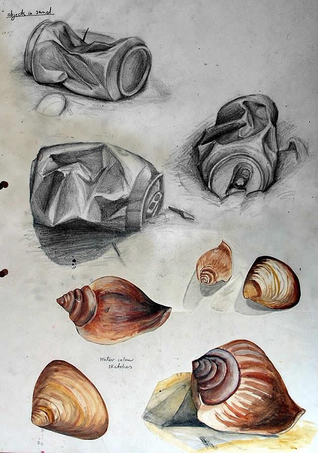 Drawn shell artist Sketchbook Examples exploring shells art