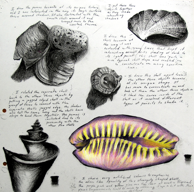 Drawn shell artist Students sketchbook examples 24 shell