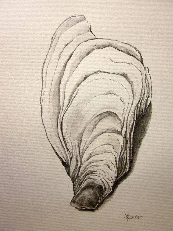 Drawn shell artist Drawings I a Pinterest oyster