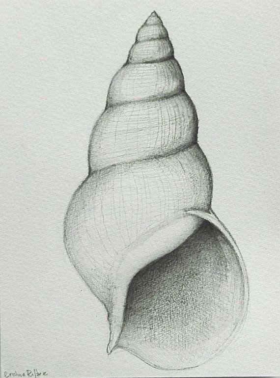 Drawn shell artist 80 Yr Original number drawing