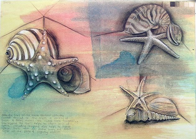 Drawn shell artist Pinterest drawings images Art students