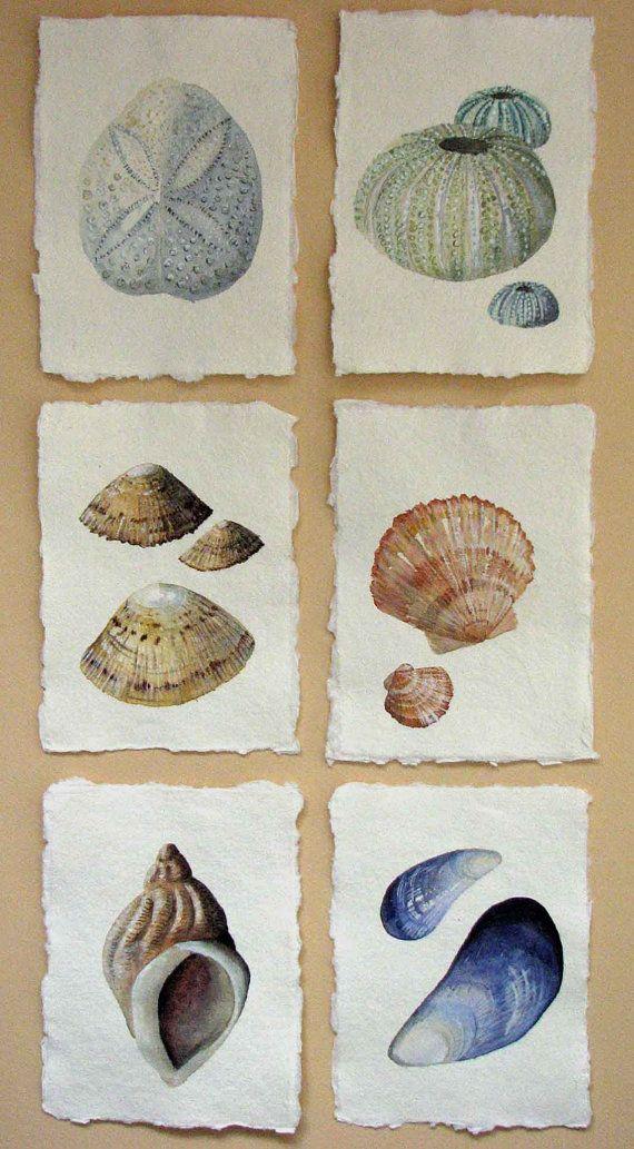 Drawn shell artist 20+ drawing art watercolour shell