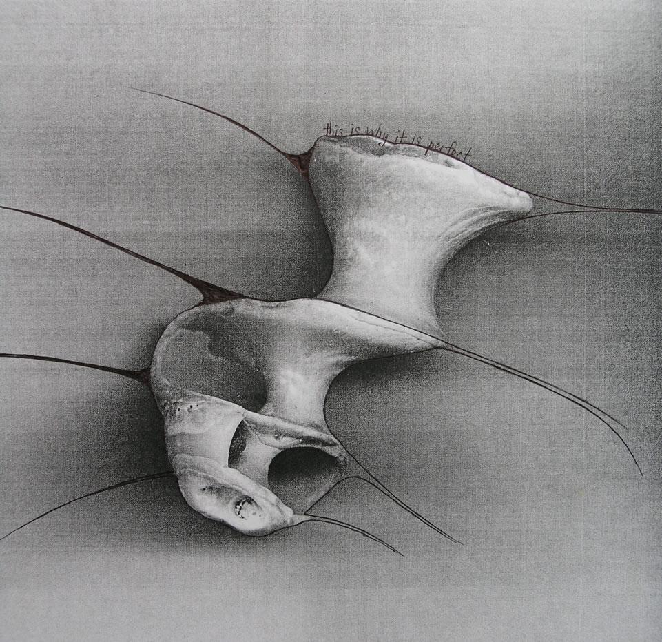Drawn shell artist Shell paintings Amiria shells Gale