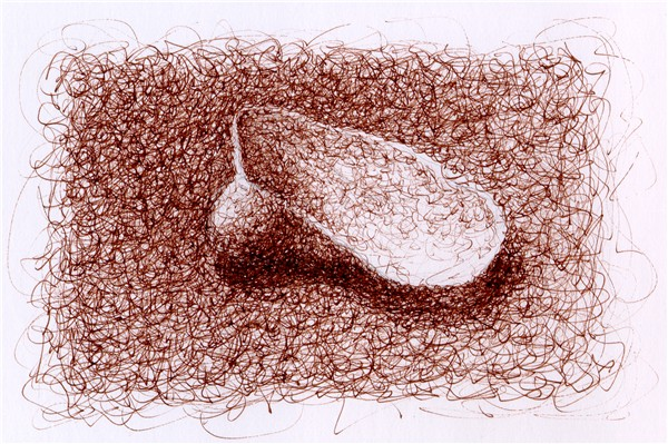 Drawn shell artist Drawing Shell Third squiggle seashells