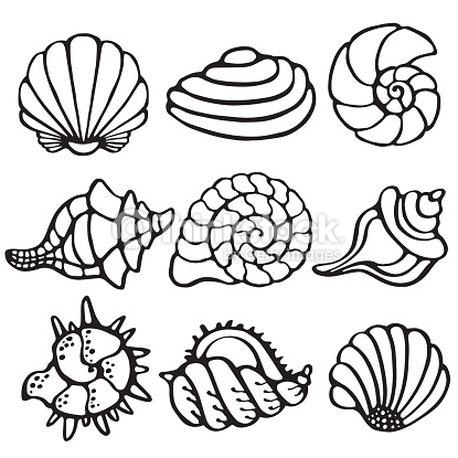 Drawn sea life simple Ocean outline Cartoon sealife shells