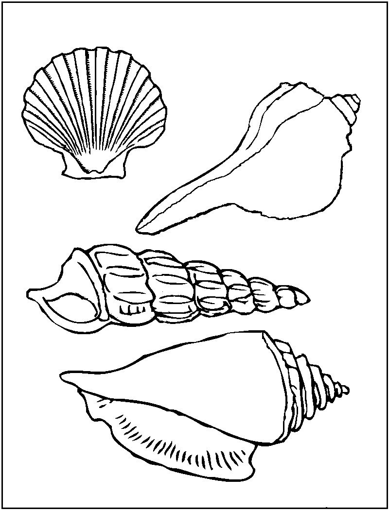 Shell clipart colouring page #9