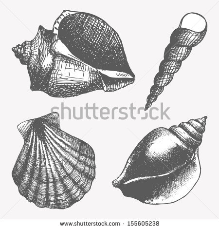Drawn sea life seashell Textured Search shell arts Search