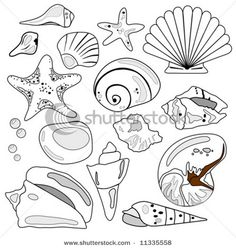 Drawn shell illustration Illustration and Stencil line and