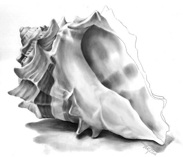 Drawn shell illustration & PaintingPainting DrawingBeautiful and Seashells