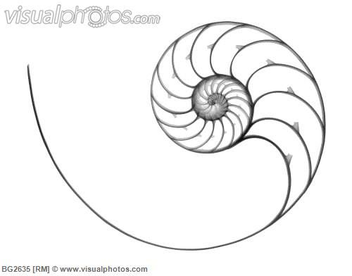 Drawn shell nautilus shell And on best Pinterest Pin