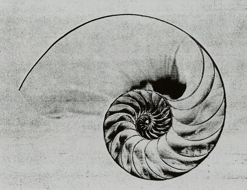 Drawn shell nautilus shell Tattoo by on color decide