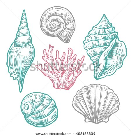 Drawn shell ocean Shell vintage  and Engraving