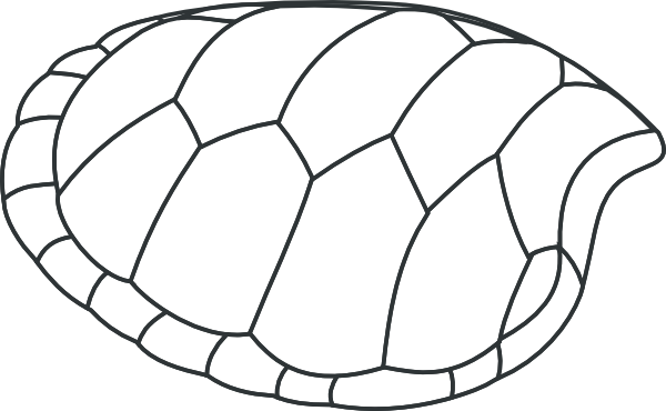 Turtle clipart pattern #10
