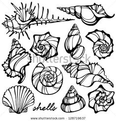 Drawn shell outline Images Stencil vector shells Shell