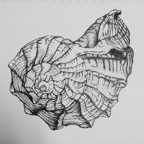 Drawn shell pen drawing More on drawings Pin this
