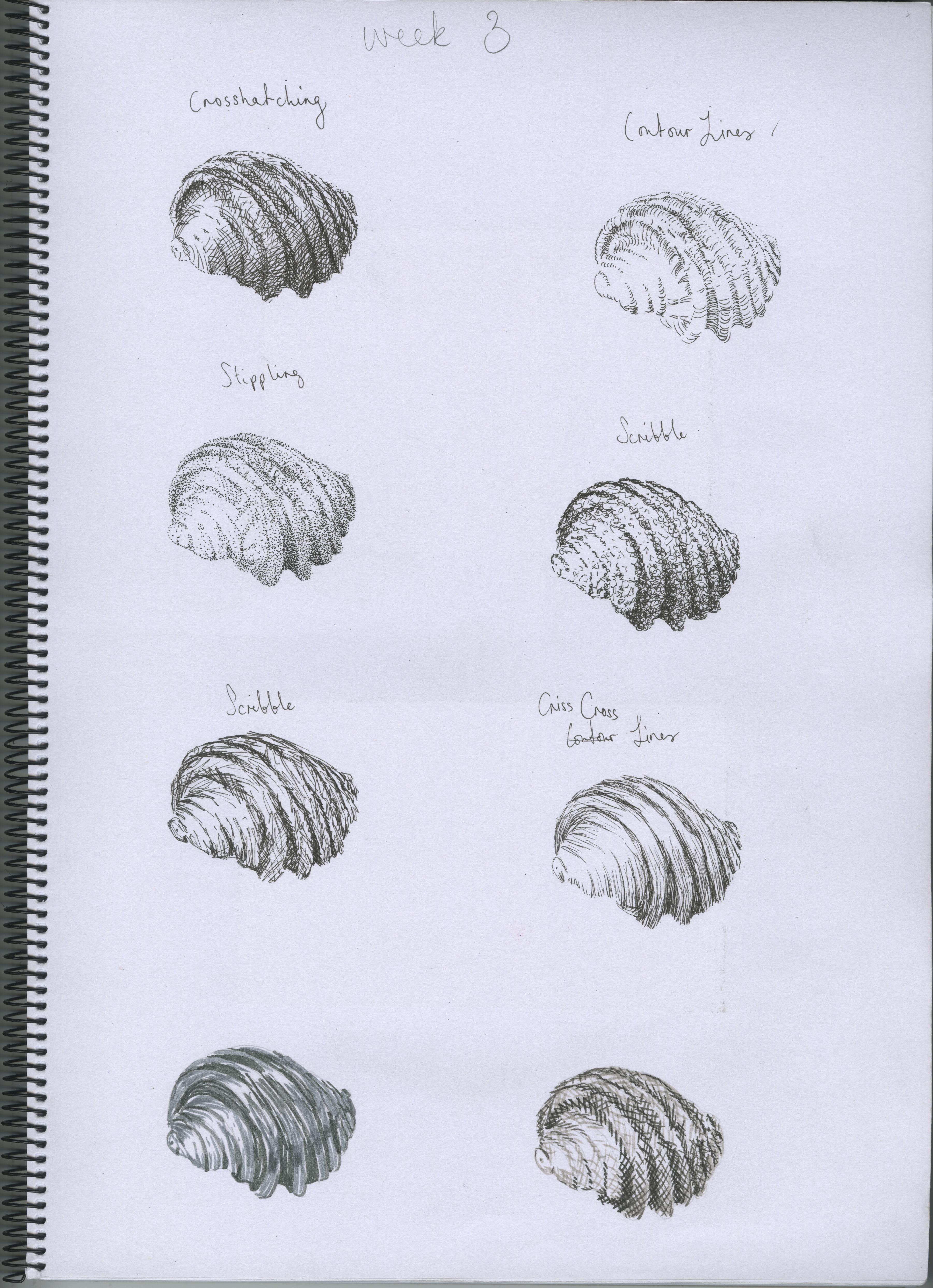 Drawn shell pen drawing 10 drawing artist 2015 14