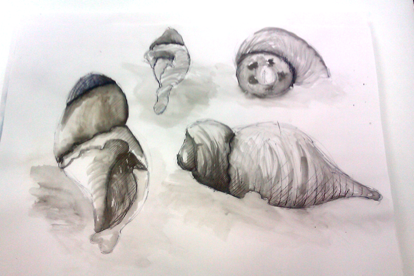 Drawn shell pen drawing Created are and pen to