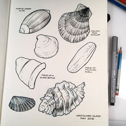 Drawn shell pen drawing The by pen seashore seashells
