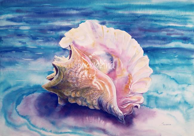 Drawn shell queen conch Shell IMGFLASH Queen Drawing Drawing