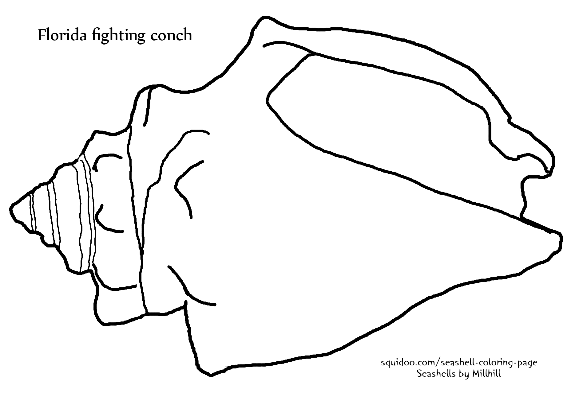 Drawn shell queen conch Seashells fighting by shell conch