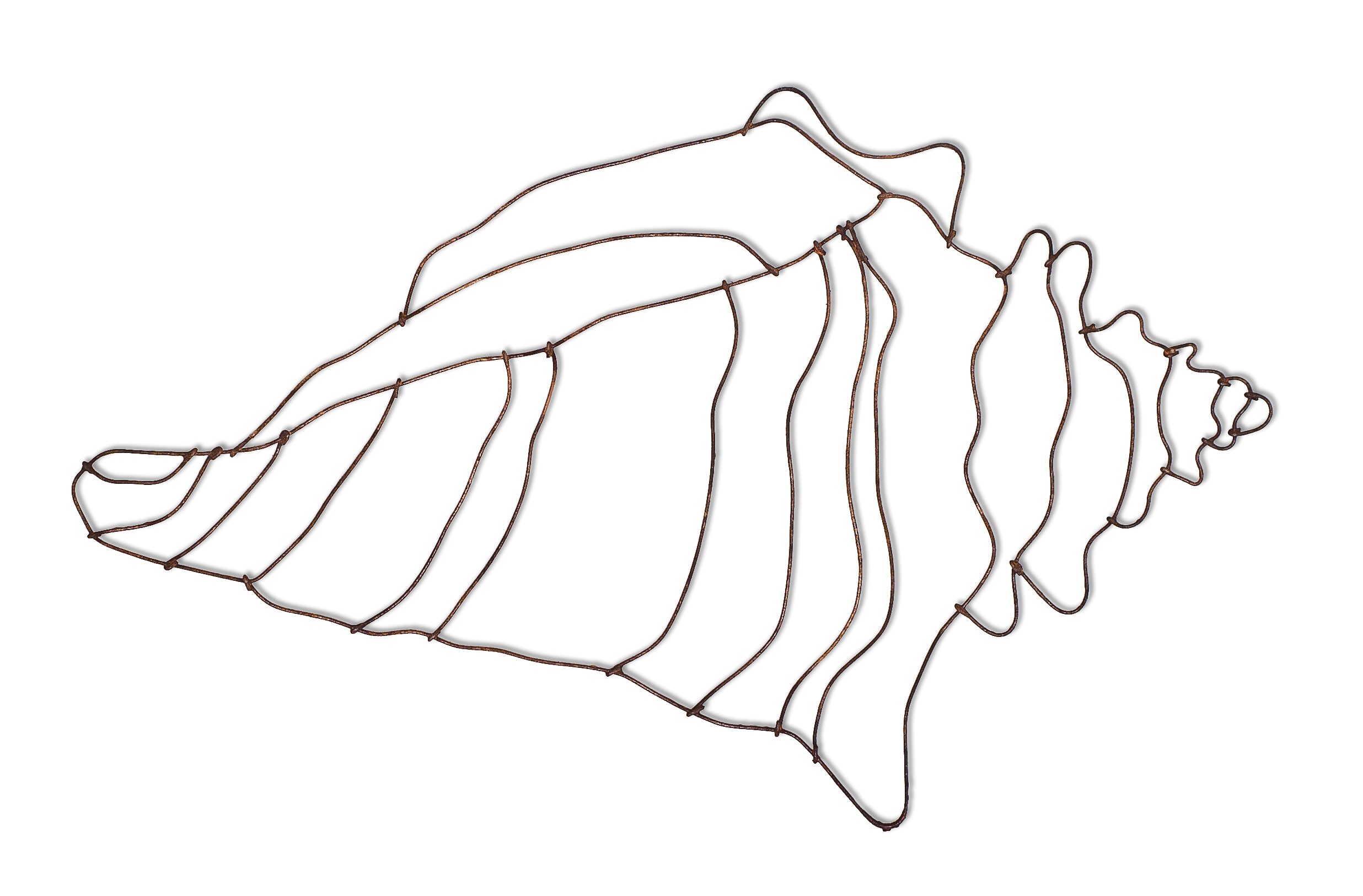 Drawn shell queen conch Free on  Art Conch